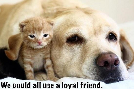 Being a Loyal Friend