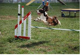 How many different obsticals are there in agility?