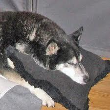 Let's say you realise that your husky is sick.  What's your first reaction?