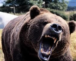 A bear has seen you and chases you through the forest. What do you do?