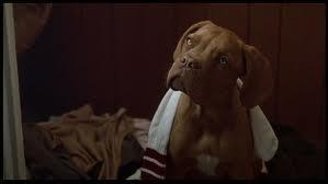 At the end of the film, sadly, Hooch died. But his lovely life still moved on through puppies! But what breed was the mother of Hooch's beloved puppies?