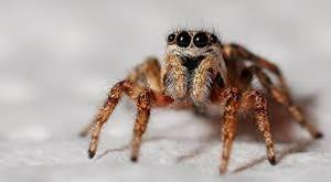 And this eight legged animal?