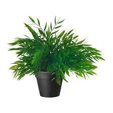 Your mom gives you a small plant that is extremely rare, what do you do?