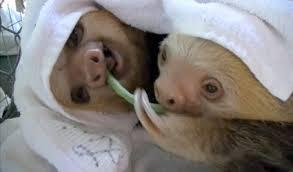 On a scale from 1-5, how much do you like sloths?