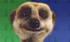 Lots of people have heard of the 'Compare the Market' meerkat, but what is the meerkats name?
