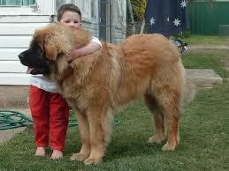 are they the biggest dogs in the world?