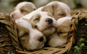 Omg its puppies all together!