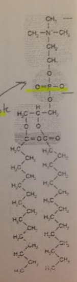 What is the best name for this molecule?