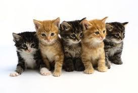 what is a group of cats called??