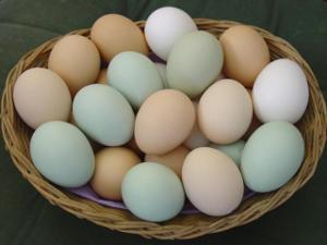 Some chickens can lay ____ and _____ colored eggs.