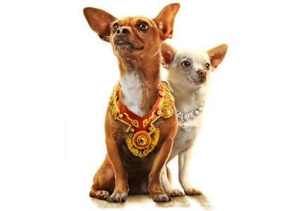 what are the beverly hills chihuahuas called?