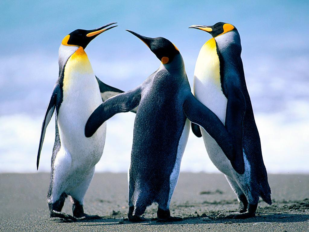 Do you like penguins? Would you Visit the Zoo?
