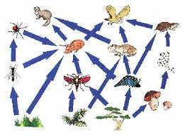 True or False Food Webs: Is this food chain in the right order? Grass ---> Lizard---> Insect---> Thrush---> Hawk