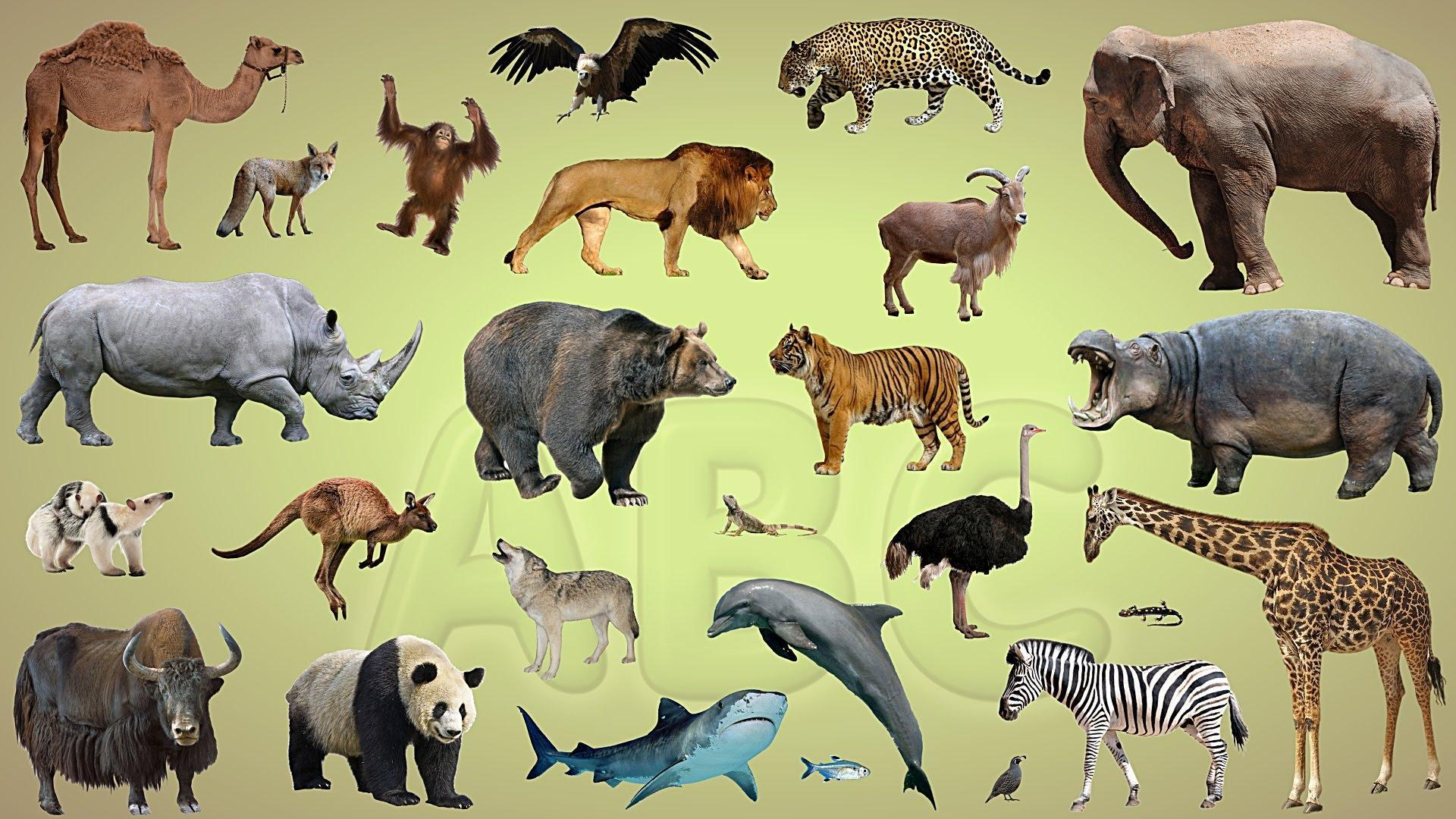 Finally, If you had to be an animal, which would it be?