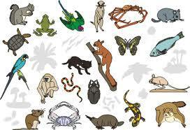 Wats ur fave animal?