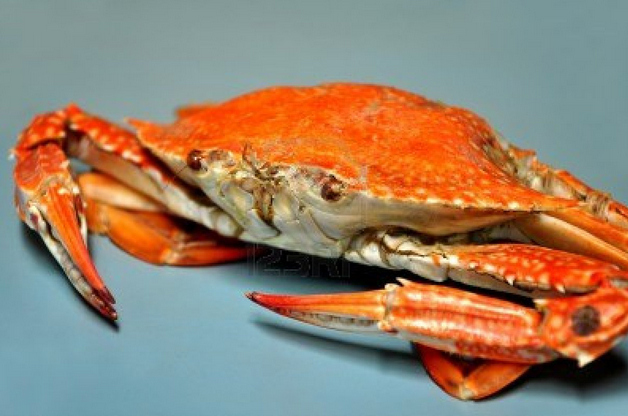 last question! How much do you like crabs?