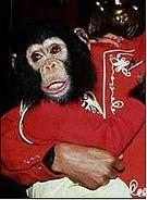 Other than Bubbles the chimp, Which other pets did Michael had?