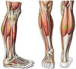 Ok Ok this one is EASY ;The muscles found in the front of your thighs are known as what?