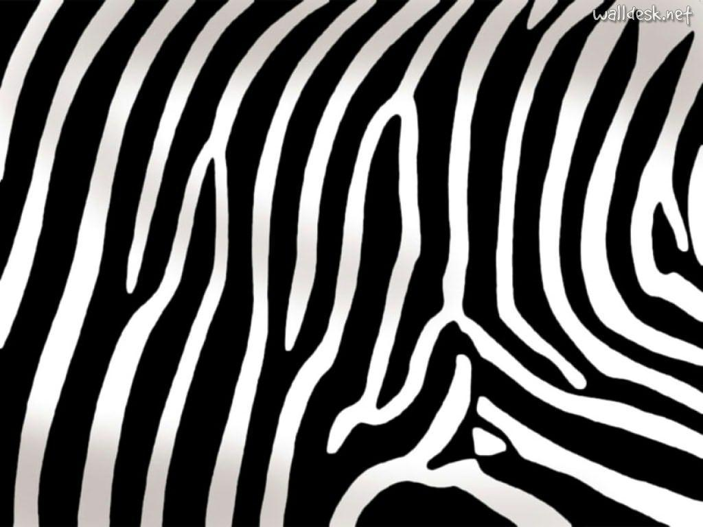 What pattern does a Zebra have?