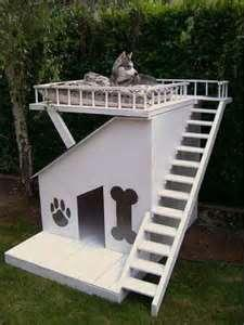 Where will you let your husky live?