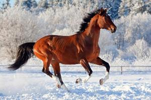 Horse are, in your opinion . . .