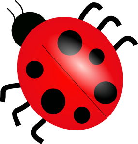How many spots does a ladybug have