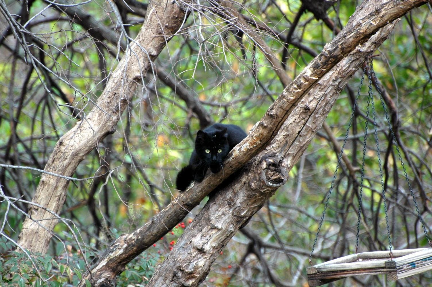 What do you do all day in your Clan?