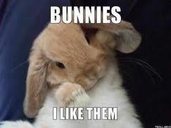 do you like bunnies?