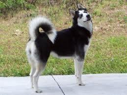 what breed is this? remeber to spell corectley ;)