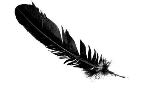 You find black feathers Everywhere! What do you do?