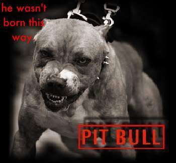 what are pitbulls used badly for
