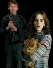 harry Ron and hermione have had a strong bond of friendship since their first year at Hogwarts,however they did fall out a couple of times throughout the series, which one of these reasons was not a reason for them to fall out at anytime?