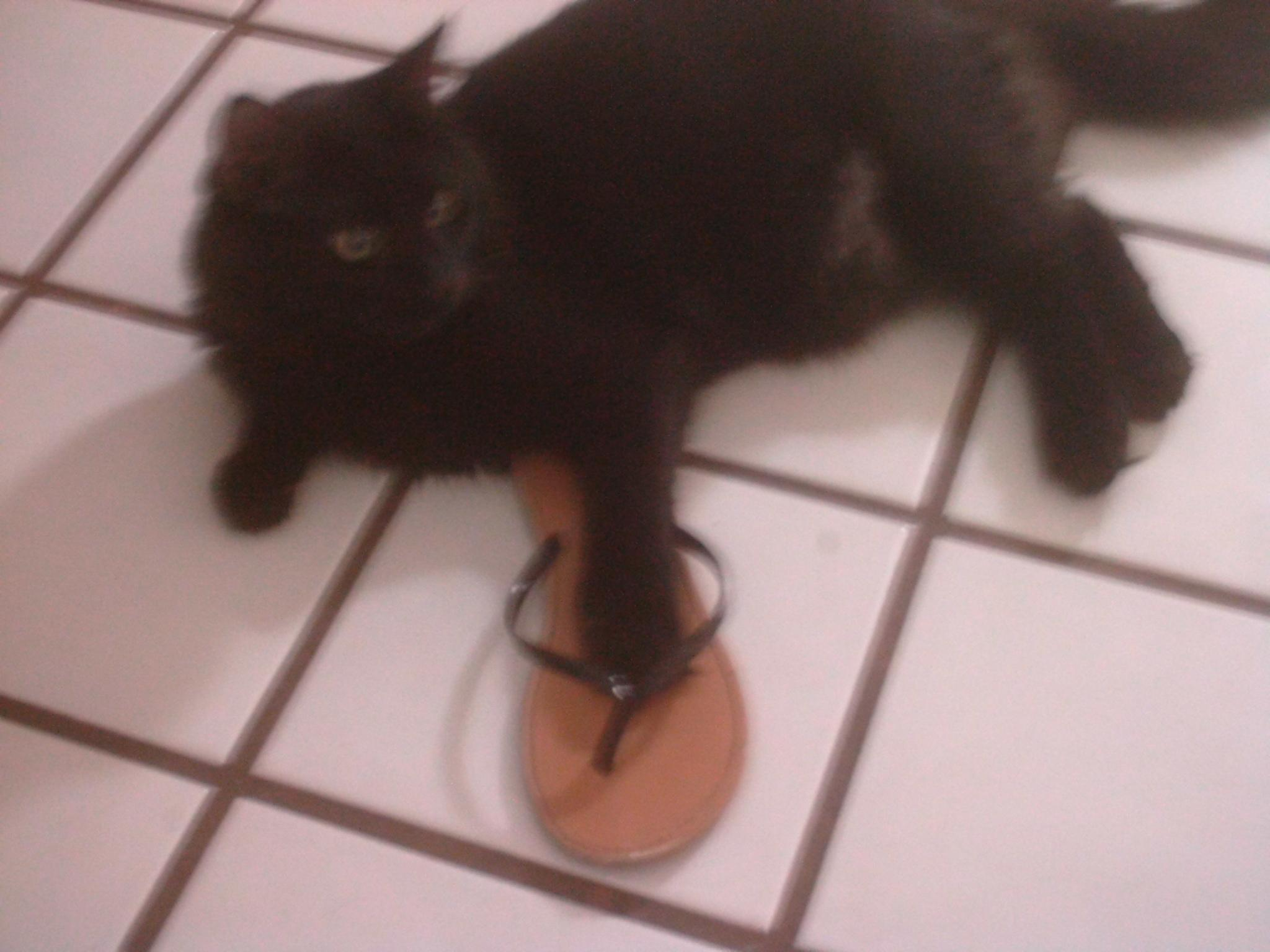 Judging from this picture, do you think cats like wearing sandals?