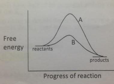 Which of the two reactions is more likely to exhibit the energy relationships shown by the A curve?