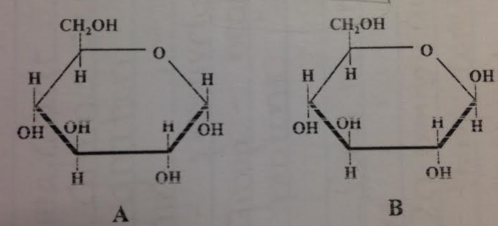 Which of these molecules could be polymerized to form starch (amylose)?