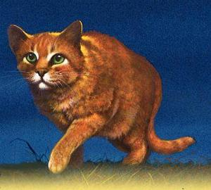 What was Firestar's kittypet name?