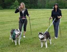 If you get a Husky, would you walk it daily?