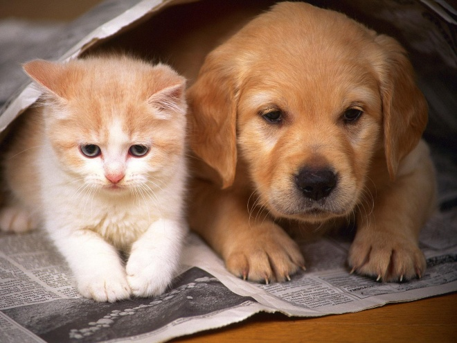 Are you more a Cat Or Dog person?