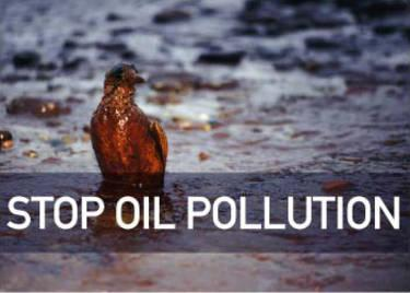 How many birds are estimated to die due to sea pollution?