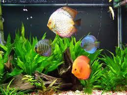 If you have 30 fish in a tank and half drown, how many fish are left?
