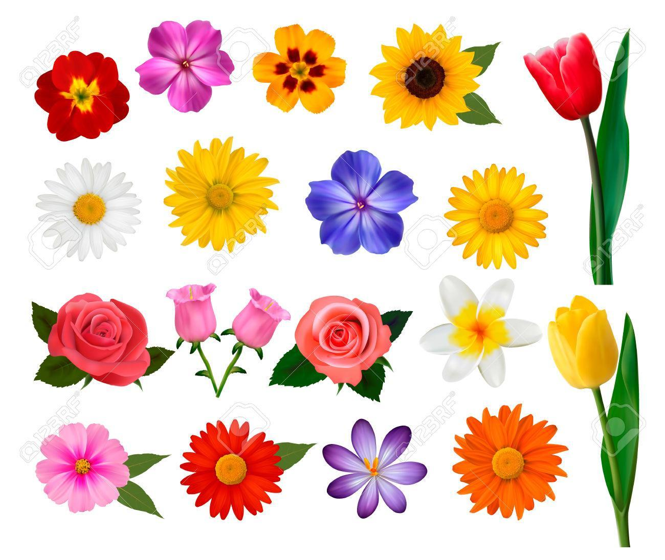 What is your favourite flower