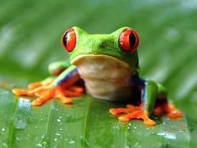 What's the lifespan of a tree frog?