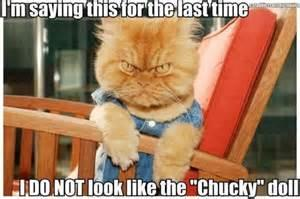 Its the Curse of Chucky....Cat?