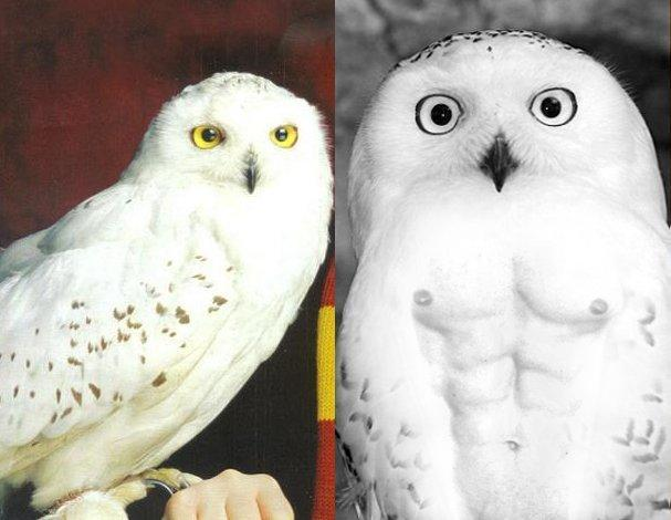 Would you rather have an Owl, or a rat?
