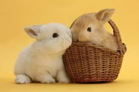Okay what about this little rabbits? Can you say aww for this one?;3