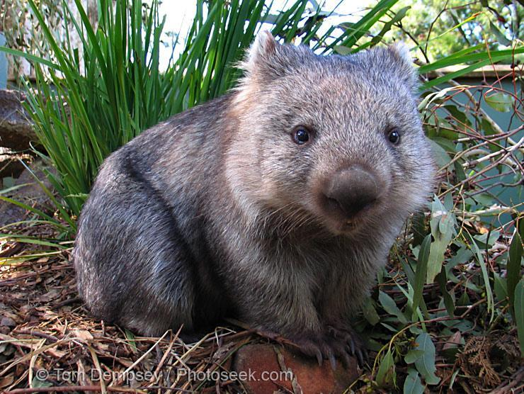 My personal favourite: Wat are wombat droppings shaped like?