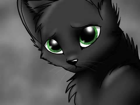 an apprentice is hurt after riverclan war! what do you do!?