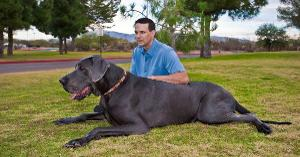 True or False?: The world's largest Great Dane's name is Dave