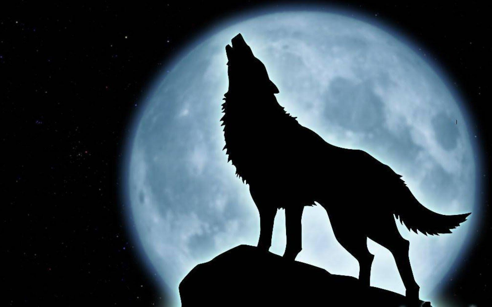 You hear a howl, find the howler. He/she is the most gorgeous you have ever seen. What do you do?