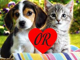if you could choose to get a dog or cat which would you get